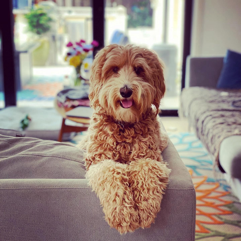 Penny Lane Kini Gayatri's Dog